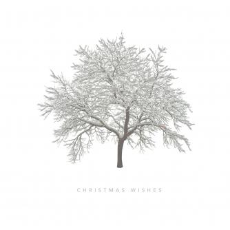 Frosty Tree Christmas Cards - Pack of 20